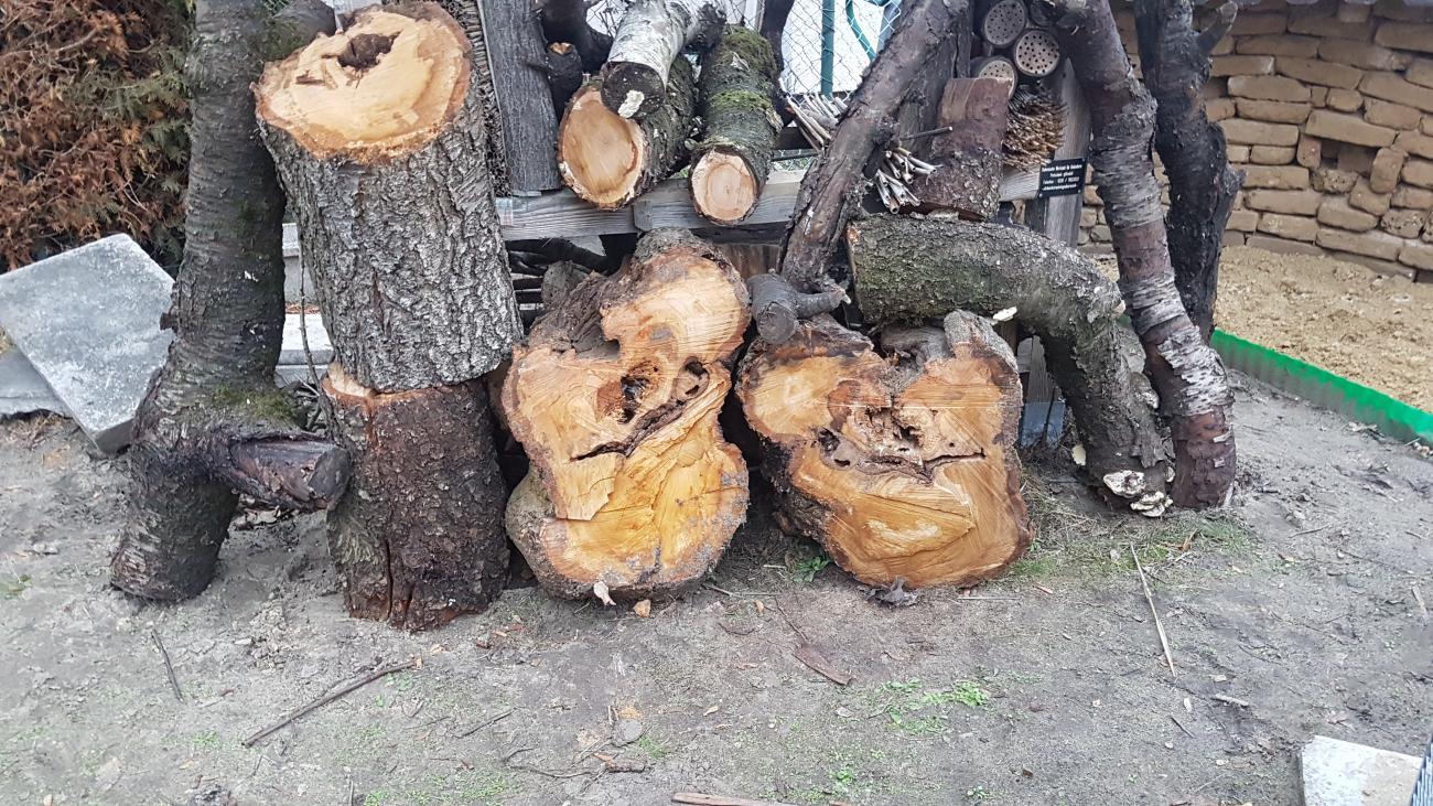 Kirschholz für die Wildbienen